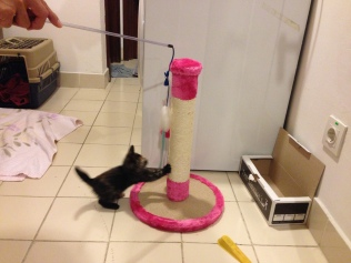 Playing by her scratching pole.