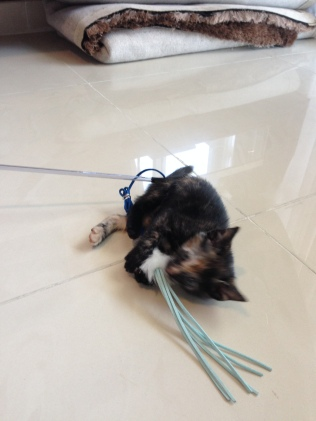 "Trying to catch a ""mouse"" on a string."