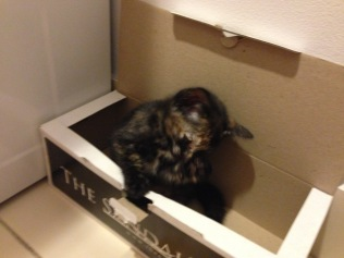 Burrowing in her favourite box.