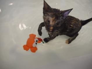 Playing with Mister Crab during her bubble bath.
