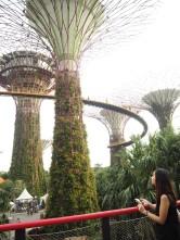Majestic supertrees.