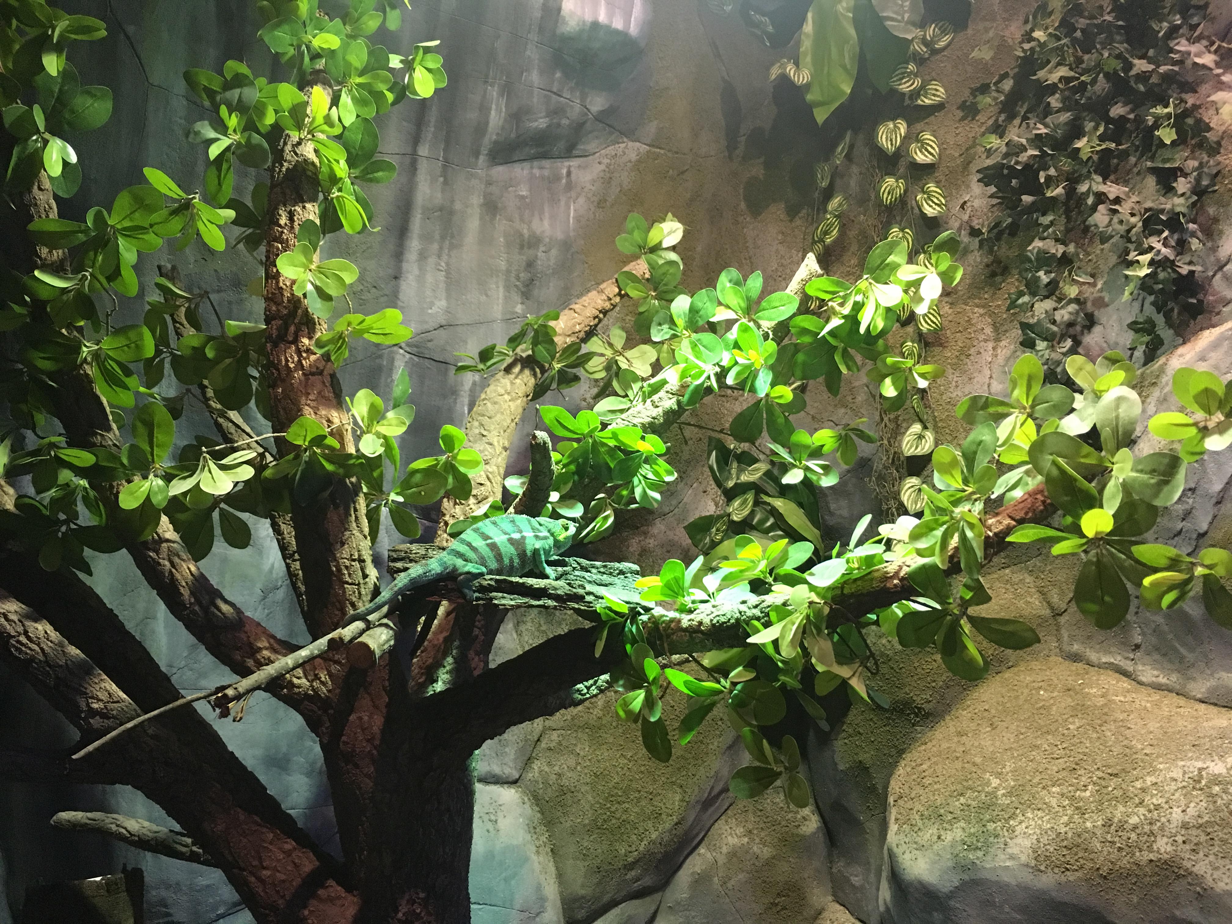 Day Trippin To Jakarta Aquarium Thediplowifey