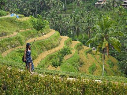 Tegallalang Rice Terrace, Ubud.