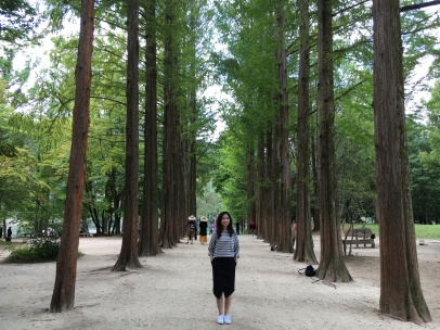 Tree-lined road, Nami Island.